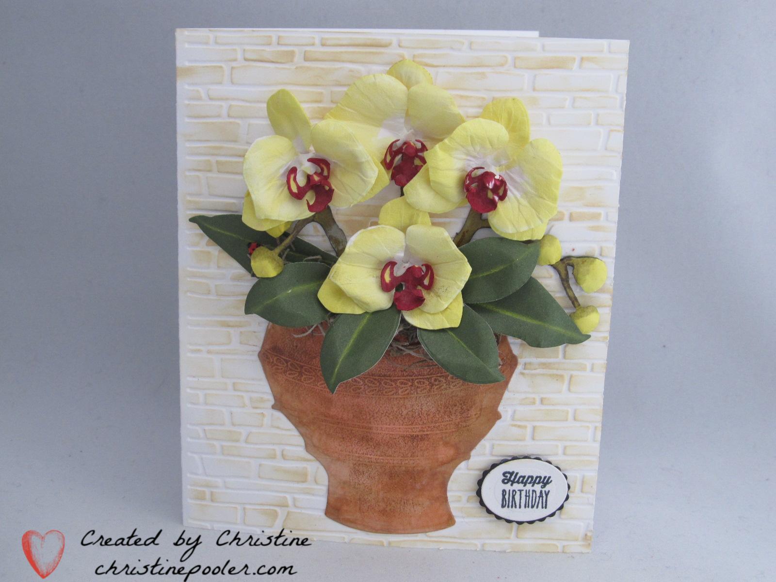 Birthday Orchid