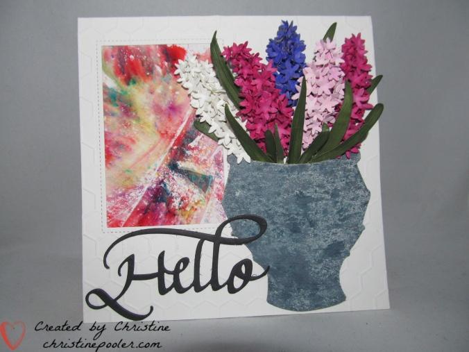 Hello Hyacinth